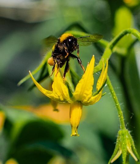 pszczołka na kwiatku