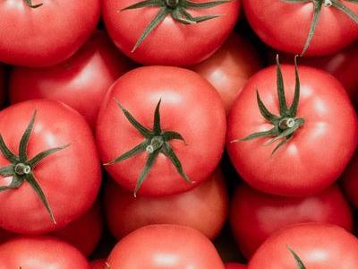 pomidor 100