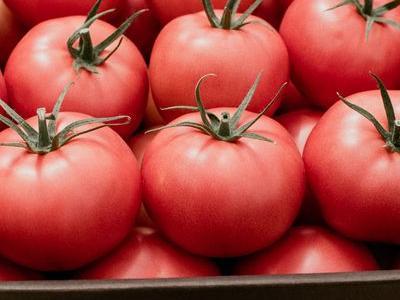 pomidor 104