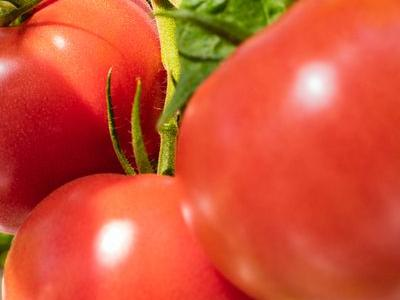 pomidor 24