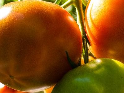 pomidor 29