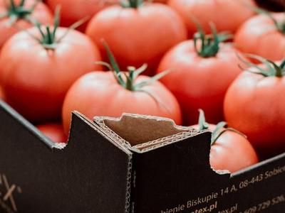 pomidor 4
