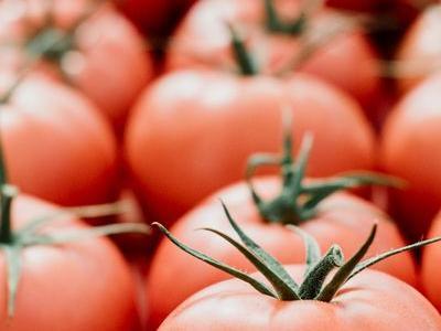 pomidor 6