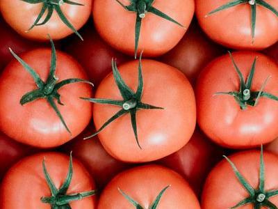 pomidor 7