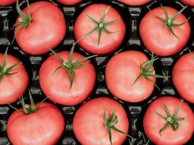 pomidor 91